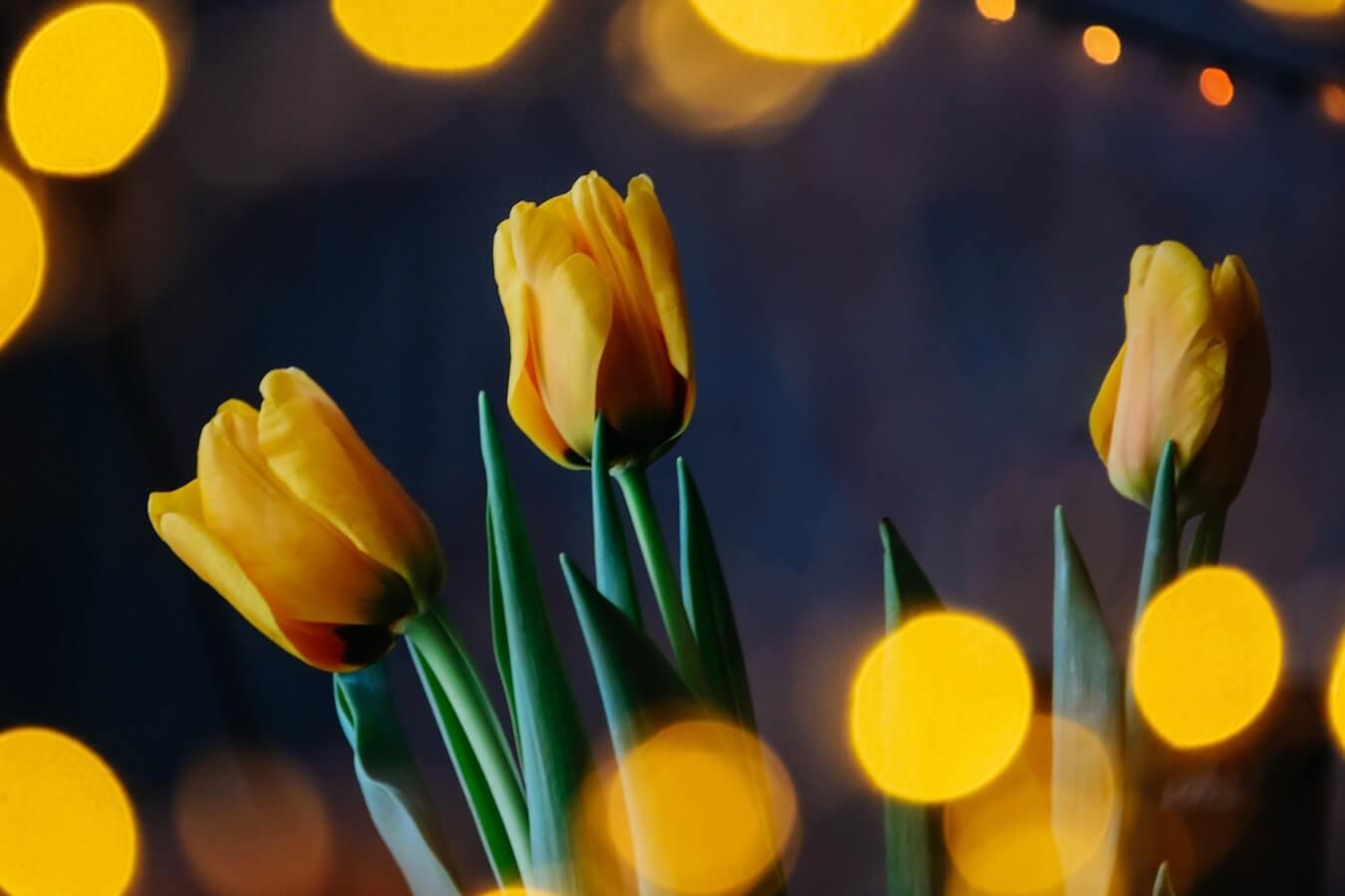 OBI & OTRADI March 2019 Newsletter